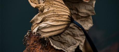 lotus-leaf-1274237_1280.jpg